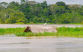 Great Egret on a submerged thatched hut — Stock Photo
