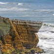 Stock Photo: SeBirds on Coastal Promontory