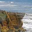 Sea Birds on a Coastal Promontory — Stock Photo