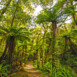 Verdant trail in sub-tropical Forest — Stock Photo #27106453