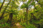 Verdant trail in a sub-tropical Forest — Stock Photo