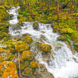 Rushing Waters in Verdant Forest — Stock Photo #27470611