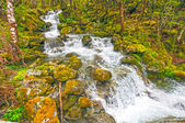 Rushing Waters in a Verdant Forest — Стоковое фото