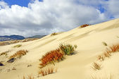 Clouds over Sand Dunes and Grasses — Stock Photo