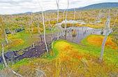 Liken ve uzak bir bataklık içinde yosun — Stok fotoğraf