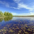 Stock Photo: Quiet Wetland Pond on Summer Day