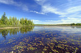 Quiet Wetland Pond on a Summer Day — Stock Photo