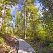 Stock Photo: Shaded trail in Coastal Forest