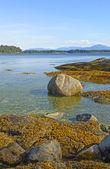 Rochers côtiers à marée basse — Photo