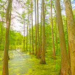 Quiet Pond in Cypress Swamp — Stock Photo #34698537