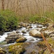 Stock Photo: Rocky Creek in a Mountain Forest