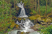 Scenic Falls in the Wild Mountains — Stockfoto