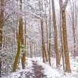 Stock Photo: Forest Trail During a Spring Snow