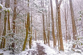 Forest Trail During a Spring Snow — Stock Photo