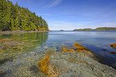 Tidal Bay on an Ocean Coast — Stock Photo