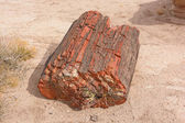 Petrified Log in the Desert — Stockfoto