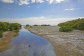 Sub-Tropical Stream entering into an ocean bay at Low Tide — Foto Stock