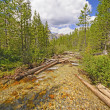Alpine Creek on a Summer Day — Stock Photo #50423181