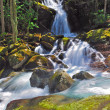 Mountain stream in the spring — Stock Photo #5543585