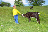 The Child and calf — Stock Photo