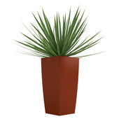 Dracena houseplant in a tall container — Stock Photo