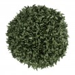 Stock Photo: myrtus topiary tree