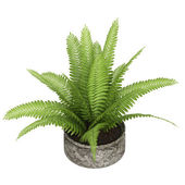 Nephrolepis fern houseplant — Stock Photo
