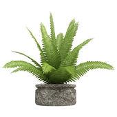 Nephrolepis fern houseplant — Stock Photo