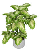 Fresh branchy home plant — Stock Photo