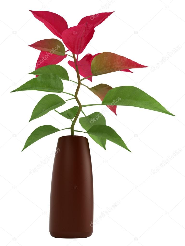 Home Plant With Green And Red Leaves Stock Photo