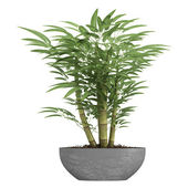 Ornamental bamboo in a container — Stock Photo