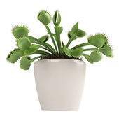 Venus Flytrap, Dionaea muscipula — Stock Photo