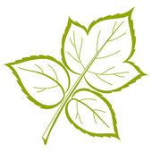 Leaf of raspberry, vector — Stock Vector