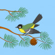 Titmouse on pine branch — Stock Photo