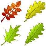 Leaves of plants, set — Stock Photo