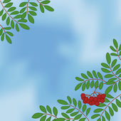Background with rowanberry on sky — Stock Photo