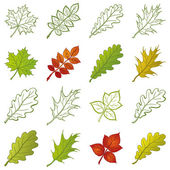 Leaves of plants and pictograms, set — Stock Photo