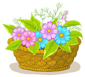 Basket with flowers cosmos — Stock Photo