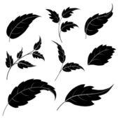 Bladeren, zwarte silhouetten — Stockvector