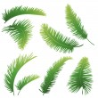 Branches of palm trees — Stock Vector