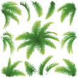 Branches of palm trees — Stock Vector #22037475