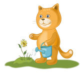 Cat watering a flower — Stock Photo
