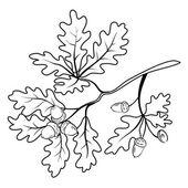 Oak branch with acorns, outline — Stock Vector