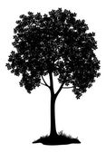 Chestnut tree, silhouette — Stock Photo