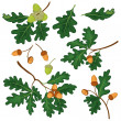 Oak branches with leaves and acorns — Stock Photo