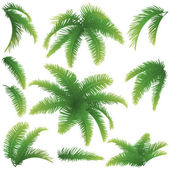 Branches of palm trees — Stock Photo