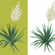 Flowering plant Yucca — Stock Photo