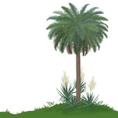 Palm tree and plants Yucca — Stock Vector