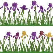 Flowers iris and grass, set seamless — Stock Vector