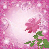 Holiday background with flower rose — Stock Photo